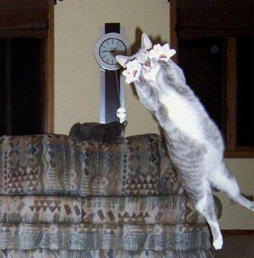 pisica-imagine