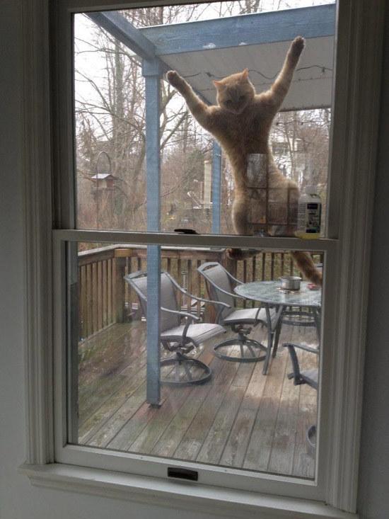 pisica-la-fereastra