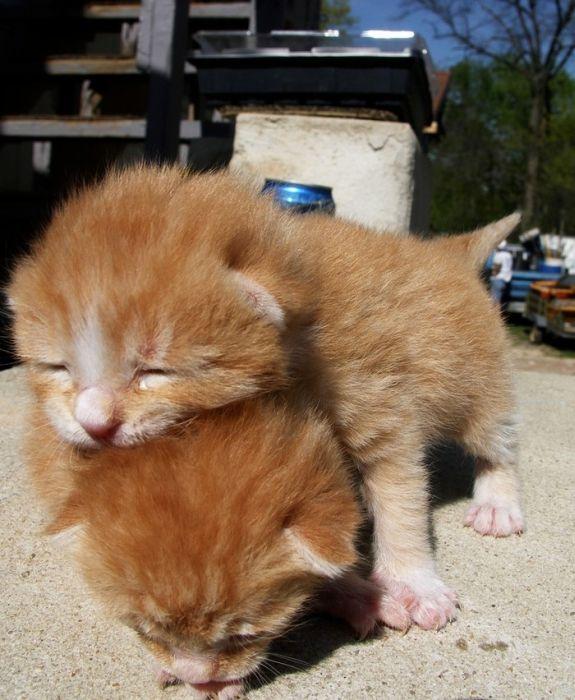 pisici-100-poze