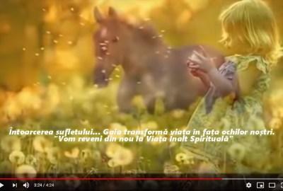 Întoarcere la Floarea Vieții (Sufletul)