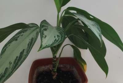 Cum se clasifică plantele în funcție de tulpinile lor?