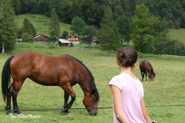 cavalli al Cirque du Fer à Cheval