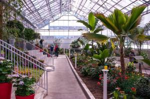 Inside the Tropical Greenhouse at Gage Park.
