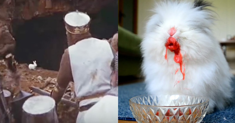 Cute Fluffy Bunny Transformed By Cherries Into The Killer