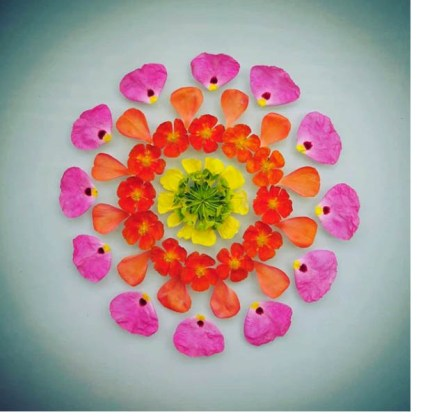 jainine bjornson madala petals 430x417 - Ephemeral Flowers
