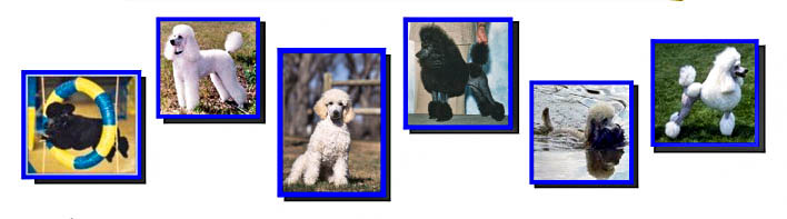 6 blue box frames with pictures of poodles
