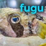Trying Fugu, Japan's Deadly Delicacy