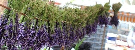 Lavender: Herbal Stress Relief