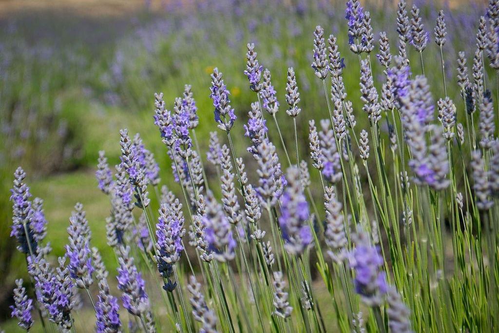 The Practical Herbalist Philosophy