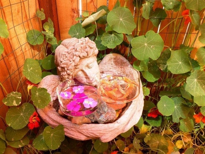 Show 24: The Path To Flower Essences & Energetic Healing With Patti Leahy