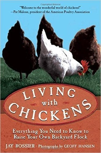 Living With Chickens By Jay Rossier