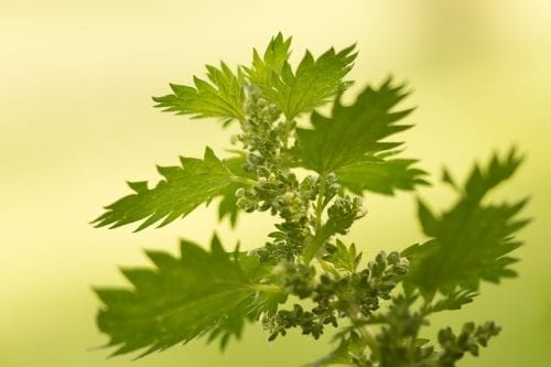 Nettle – The Sum Of Its Parts