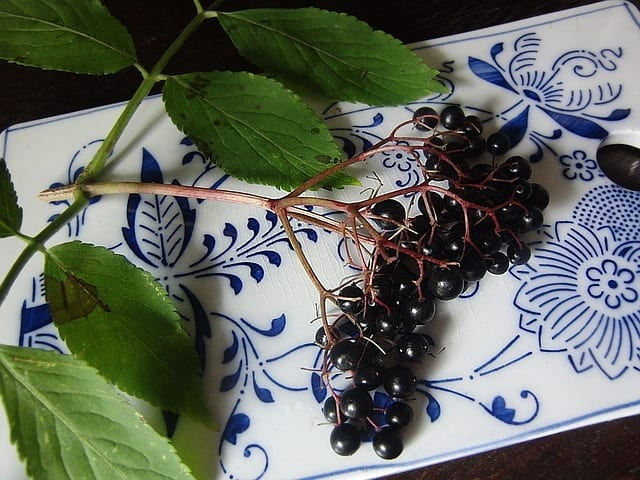 Elderberry Syrup – Vital Tool For Flu Prevention – A Clinical Memory
