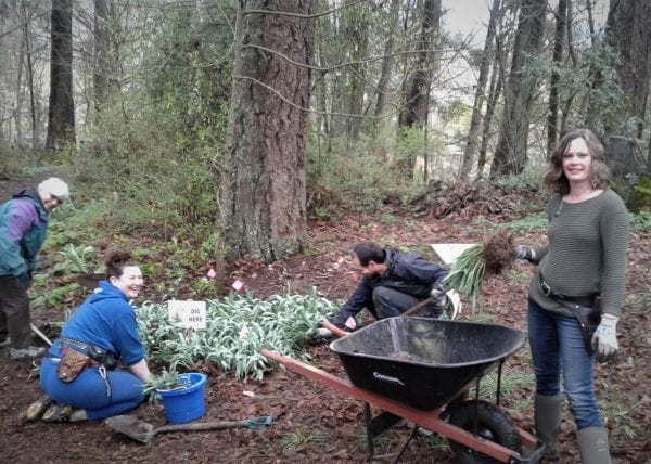 Daylight Grave Diggers – New Life In An Old Cemetery – The Shoestring Herbalist
