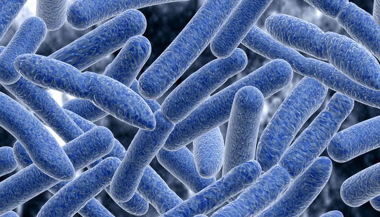 Image result for botulism bacteria