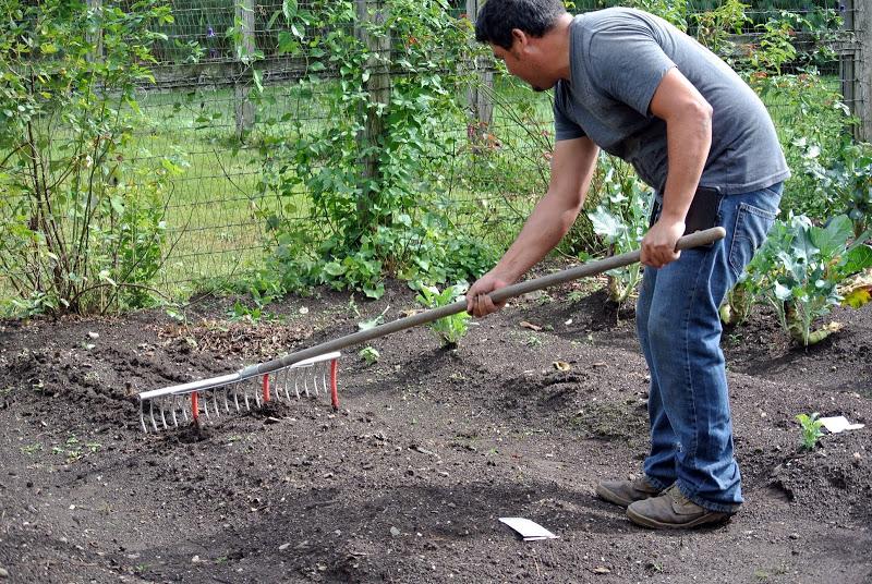 rake with hose for seed spacing 1 - themarthablog-dot-com Garden Hacks