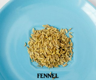 fennel for mackerel in tomato sauce