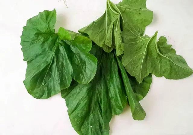 Ugbogoro leaf