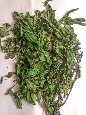 bitter-leaf-1-8