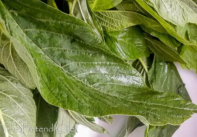 18 amazing health benefits of amaranth greens