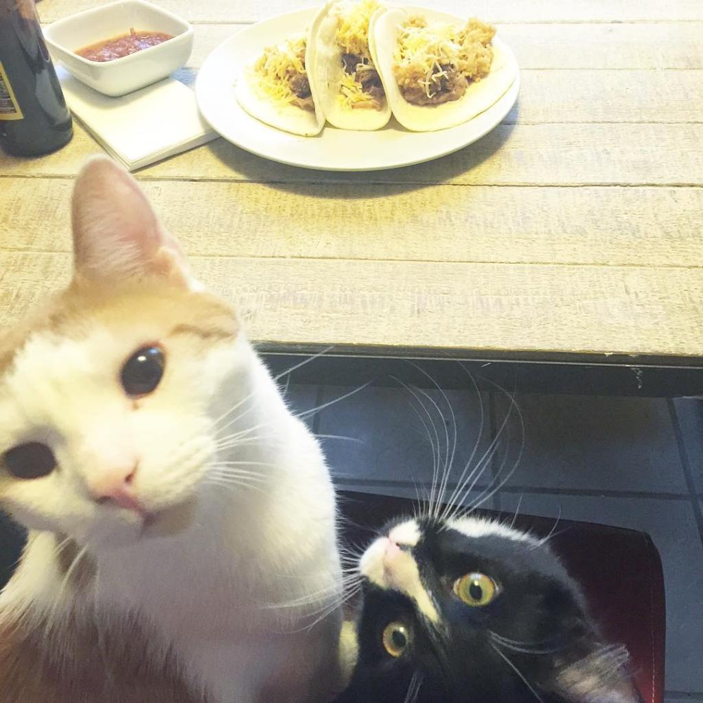 """We can haz Dad's tacoz?!"" - #joey2chainz #norththekitten How are they so cute????"