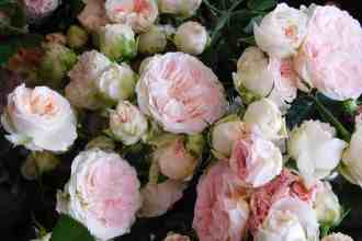 Wholesale flowers grown & packed at Neve Bros.