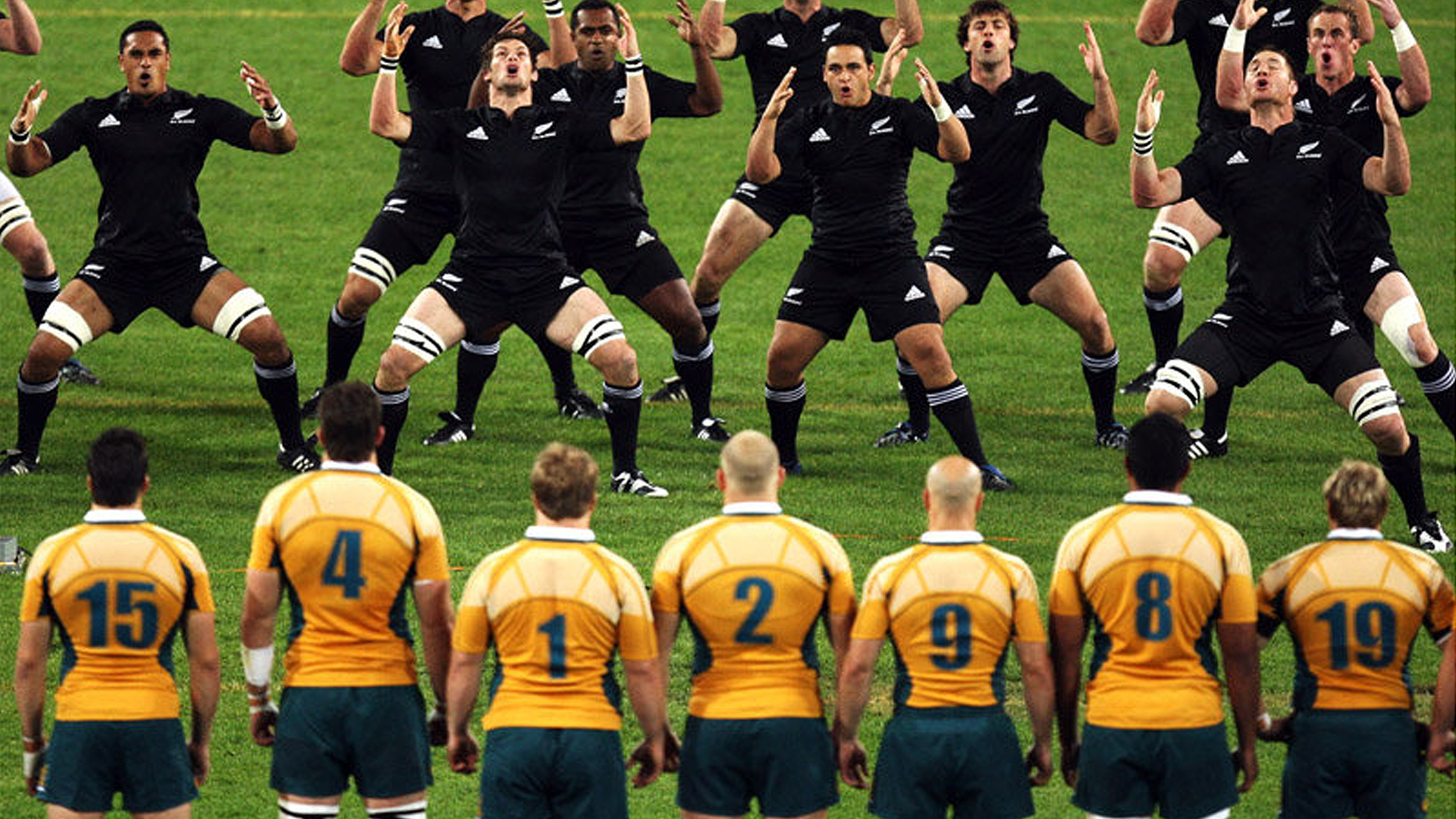 Australia Vs New Zealand Bledisloe 3 Currie Cup Preview The Profits