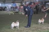 Sydney_Rotal_Dog_Show_The_Pug_Diary_03042015_0059