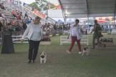 Sydney_Rotal_Dog_Show_The_Pug_Diary_03042015_0061