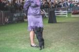 Sydney_Rotal_Dog_Show_The_Pug_Diary_03042015_0063