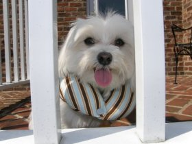 Puppy Bumpers – Keeps Your Tiny Dog From Squeezing Thru Small Spaces – Blue Stripe Small