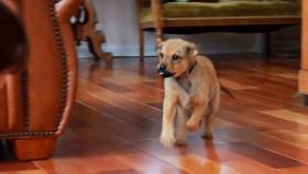 Potty Training Puppy Now