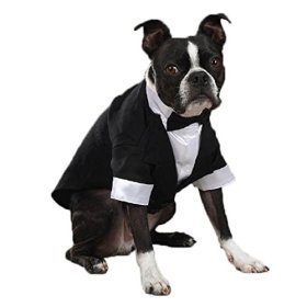 East Side Collection Yappily Ever After Groom Tuxedo