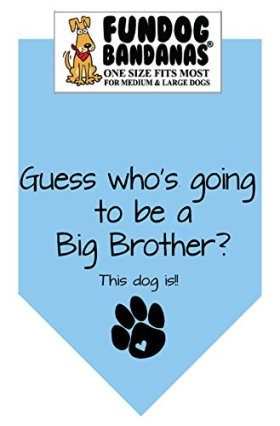 BANDANA – Guess Who's Going to Be a Big Brother for Medium to Large Dogs – Light Blue