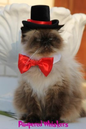 The Aristocrat Top Hat (Hat Only) (red ribbon)