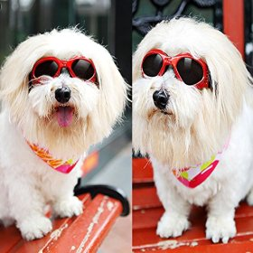 Pet Dog Sunglasses – Protective Eyewear Goggles Small Waterproof Protection (Red)