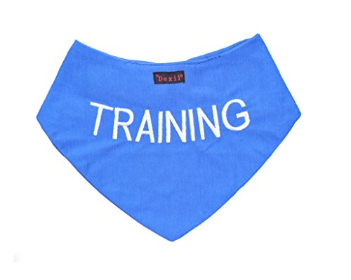 TRAINING Blue Dog Bandana quality personalised embroidered message neck scarf fashion accessory Prevents accidents by warning others of your dog in advance