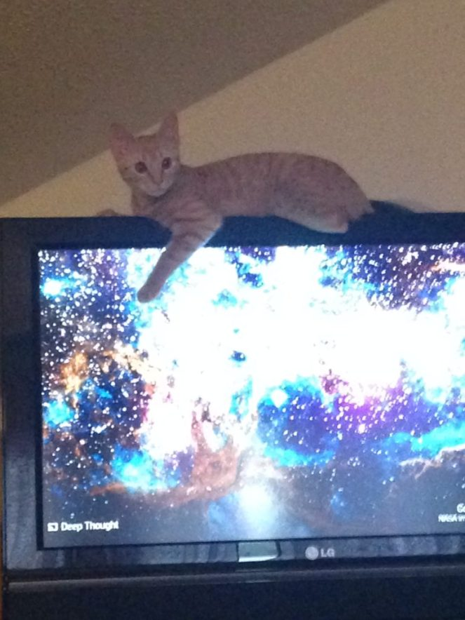 Cats are weird. Mine likes to sit on top of the tv.