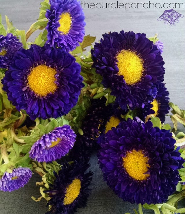 Purple Asters by The Purple Poncho