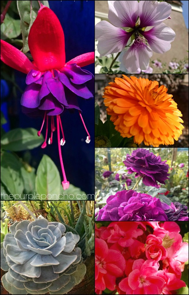 May Flower Finds on thepurpleponcho.com by Carolyn Calderon