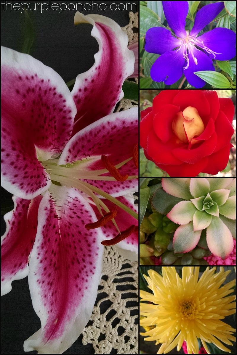 Flowers of the Month by The Purple Poncho