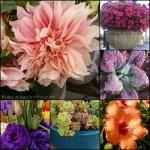 Flower Finds – July