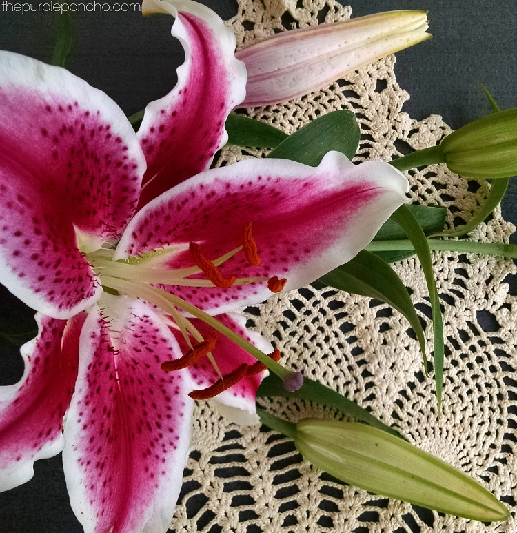 Lilies and Doilies by The Purple Poncho