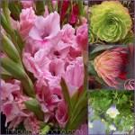 Flower Finds – September