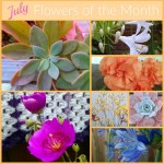 July Flowers Of The Month