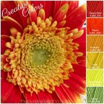 Creative Colors – Gerber Daisy – Fall Palette