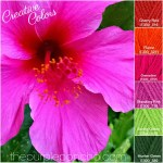 Creative Colors – Hibiscus – Pink Palette!