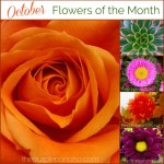 October Flowers Of The Month