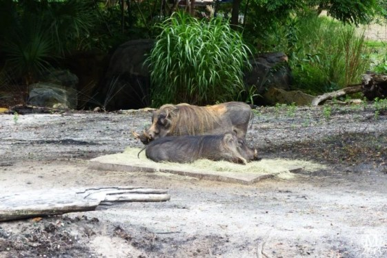kilimanjaro-safaris-12