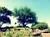 kilimanjaro-safaris-24